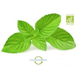 Menthe poivrée Bio en Vrac - Pharm'infusio - Poids à choisir